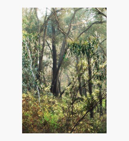Bush Sparkle by Lorraine McCarthy Photographic Print