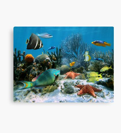 Coral reef and starfish Canvas Print