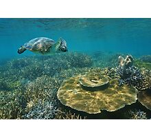 A green sea turtle underwater over coral reef Photographic Print