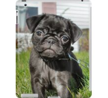 Black Pug iPad Case/Skin