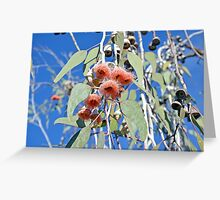Pink gum tree blossoms and bees Greeting Card
