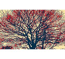 Beautiful tree Photographic Print