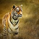 Tiger in the grass by Tarrby