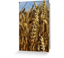 Ear of wheat Greeting Card