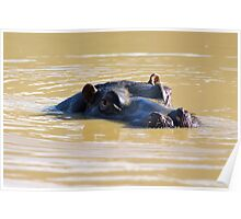Happy as a Hippo Poster