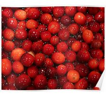 Cranberries for Christmas Poster