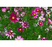 Late Summer Flowers Photographic Print