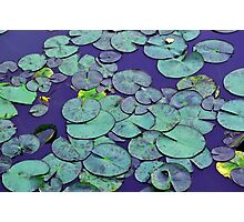 Waterlilies in blue Photographic Print