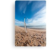 Beach feather. Canvas Print
