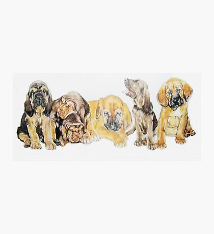 Bloodhound Puppies Photographic Print