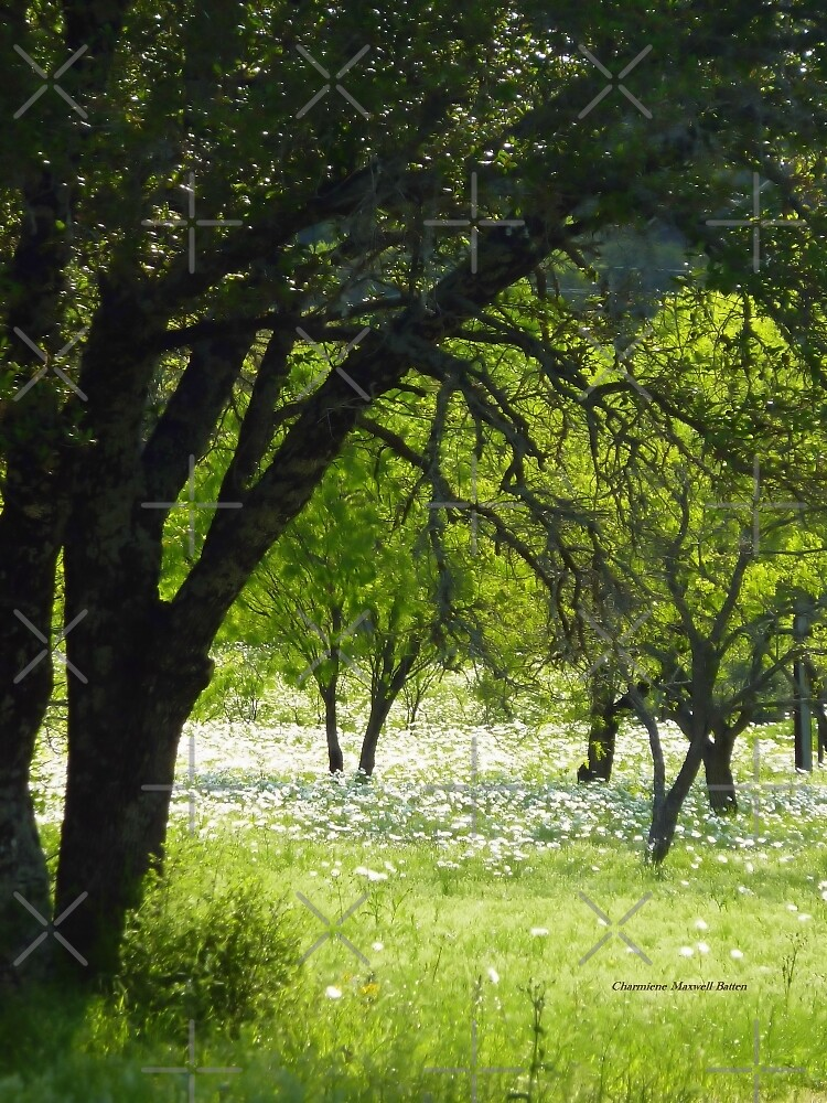 Texas White Poppies by Charmiene Maxwell-Batten