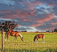 Sunrise over palomino mare and foal by bcarner