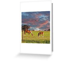 Sunrise over palomino mare and foal Greeting Card