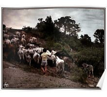 Bringing Home the Cattle, Mexico Poster