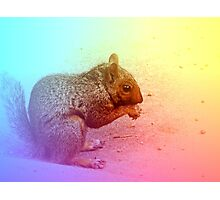 Squirrel in Winter Photographic Print
