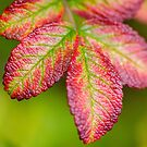 Autumn Rose Hip Leaves by M.S. Photography/Art