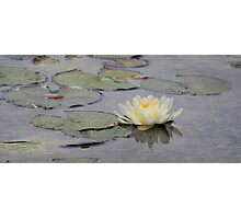 The lotus flower of Bethesda Fountain Photographic Print