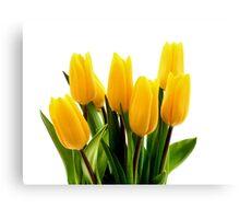 Fresh Yellow Tulips Canvas Print