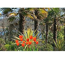 Palms & Tulips Photographic Print