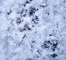 A Cat´s Path, paw-prints on the ice-cold ground by Kristine Themsen