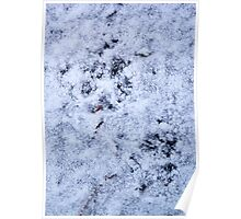 A Cat´s Path, paw-prints on the ice-cold ground Poster