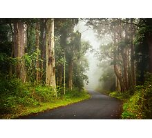 Foggy Road... Photographic Print
