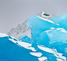 The melting arctic by puratura