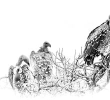 waiting- masai mara kenya by Pascal Lee (LIPF)