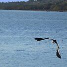 In flight by Paul Pasco