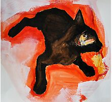 That Black Cat Photographic Print
