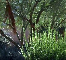 Palm Desert Art Museum Of The Desert, California by Sherri     Nicholas