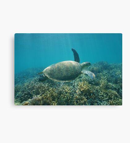 Underwater green sea turtle Canvas Print