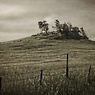Early Morning around Canberra Race Course (ACT/Australia) (7) by Wolf Sverak