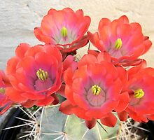 Potted Flowering Cactus by Kathleen Brant