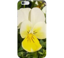 Yellow Pansy iPhone Case/Skin