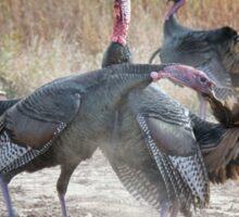 Turkey pulling feather Sticker