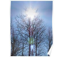 A Crown of Sun for a Tree Poster