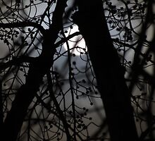The Full Moon Through the Trees by DevinStar