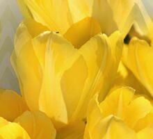 Watercolor Yellow Tulips with Chevron Sticker