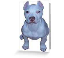 little white puppy pit Greeting Card