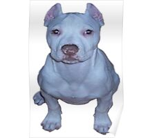 little white puppy pit Poster