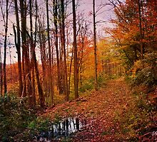 Somewhere in Time ~ A Logging Trail by SummerJade