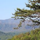 Mountain Tree by Bob Hardy