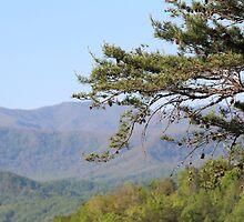 Mountain Tree by Bob Hardy