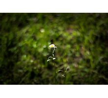 Daisy on Blurred Nature Background Photographic Print