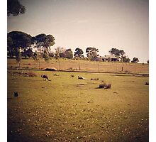 Kangaroo Flats Photographic Print
