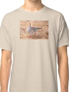Crested Pigeon Classic T-Shirt