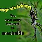 banner for arachnids by vigor