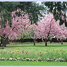 Pretty Pink Beaut Blossom Terrific Trees by KazM