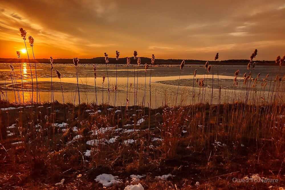 Plum Island Gold by Owed To Nature